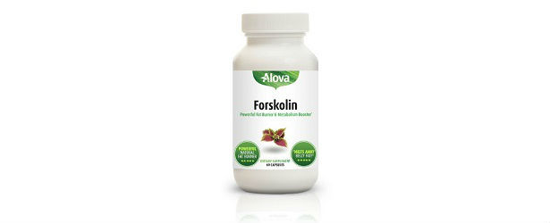 Alova Forskolin Review 615